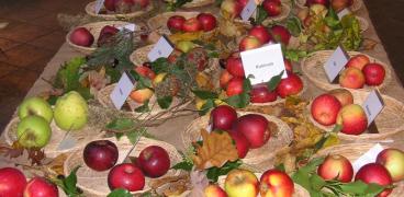 """16. Obsttag """"Rund um Obst & Gemüse"""" 13.10.19"""